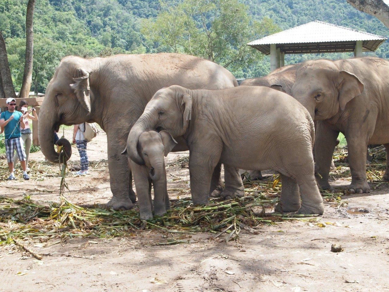 Auch Elefanten kuscheln gern