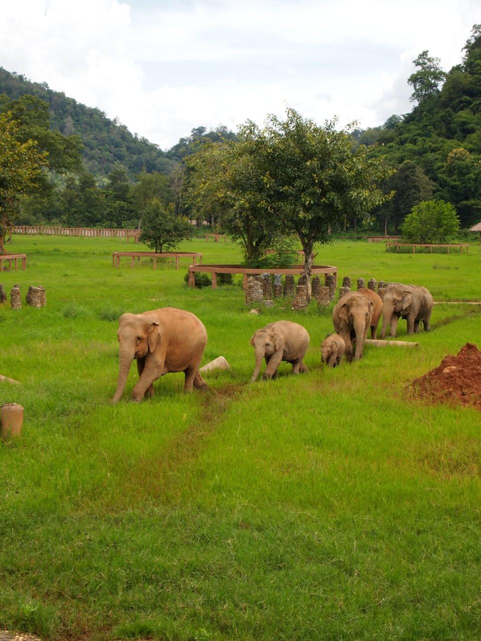 Die Elefanten haben ihre Trampelpfade. Erinnerte uns sehr an das Dschungelbuch.