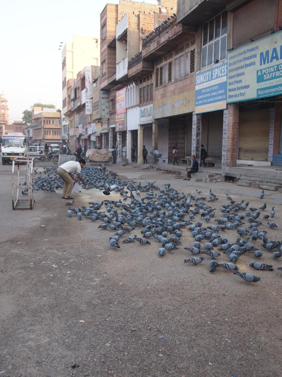 Viele Tauben überall