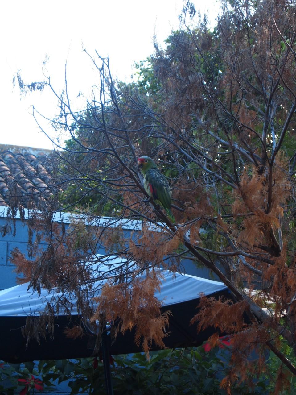 Einer von vielen Papageien. Der lebte bei uns im Hostel.