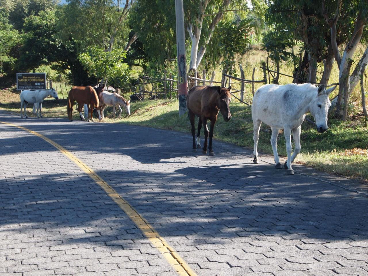 In Nicaragua sieht man viele Pferde frei rum laufen.