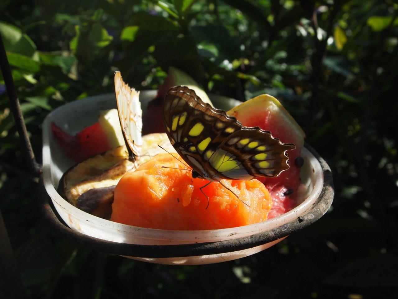 Ausflug zur Schmetterlingsfarm